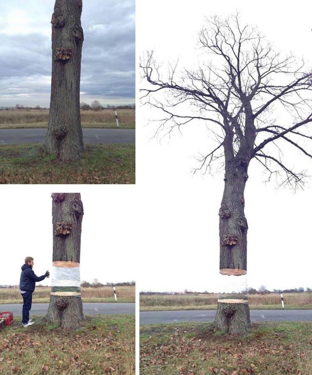 この発想は面白い!木が途中で切断されて空中に浮いているように見えるアート