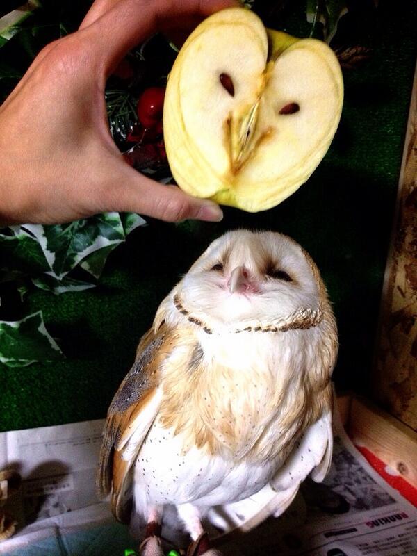 可愛すぎる!「リンゴを剥いたらフクロウが出てきた!」とTwitterで話題に