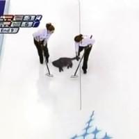 【動画】オリンピックの新種目!?猫を滑らせて円の中心を狙う「猫カーリング」が凄いぞ!