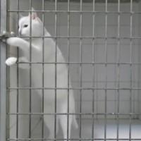 【動画】猫が動物病院から逃げ出す一部始終を収めた動画が可愛いwww