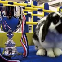 イギリスで開催されたウサギの障害物競走の様子が可愛すぎる!