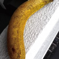 【小ネタ】バナナに虫ピンを刺して描く「バナナート」の迷路が凄い!