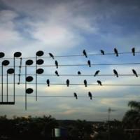 電線にとまっている鳥の位置を音符に変換して作った曲が美しいと話題