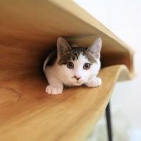 猫が超楽しく生活できるテーブル「CATable」
