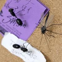 これぞ虫ピン!?「蚊」の形をした虫ピン「Insect Pushpins」がキモ面白い!