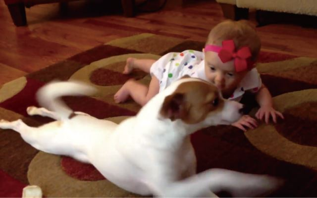 【動画】犬が赤ちゃんにハイハイの仕方を教える驚きの動画