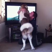 【動画】TVに映る熊が大嫌いでめちゃくちゃ怒る犬
