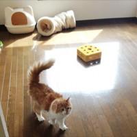 入居すると猫がついてくる「猫付きマンション」が話題、猫付き物件一覧もあるよ