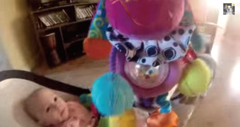 赤ちゃんの玩具を盗んだ罪悪感に耐えられなくなった犬のとった行動とは?