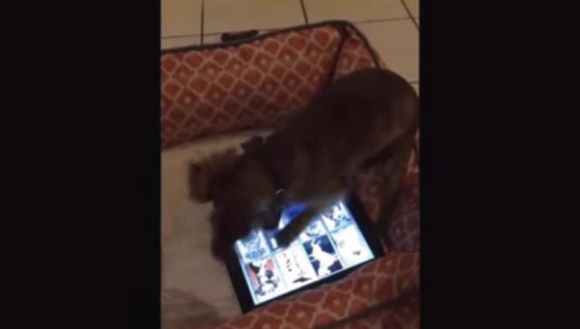 【動画】超高速でiPadを操る犬、最後はなぜか逃走