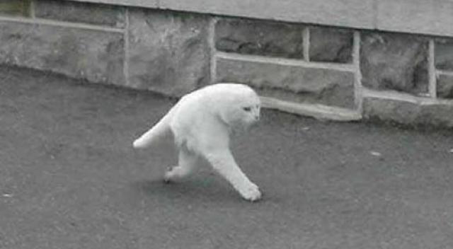 Googleストリートビューに写っていた謎の二足歩行猫がストラップになっていた!?