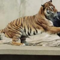 発想が凄い!ライオンやトラに噛ませて作ったダメージジーンズ「ZOO JEANS」