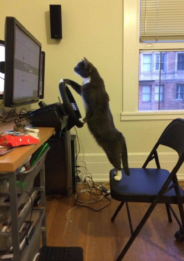 【小ネタ】車のゲームを真剣にプレイする猫