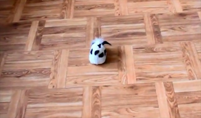 【動画】ピョンピョン飛び跳ねて超可愛い!子猫のニキータちゃん vs ロボット犬