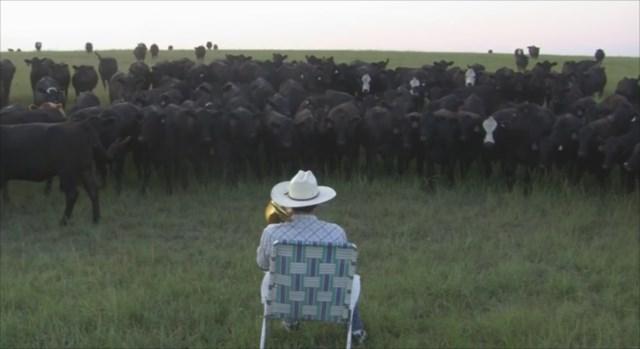 【動画】トロンボーンで牛を大量に呼び出す男が凄い!まるで演奏会の観客のようだ