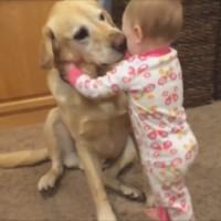 【動画】観ると幸せな気持ちになれる-犬と赤ちゃんの動画傑作集