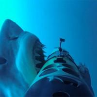 大迫力!サメ専用カメラ「SharkCam」で撮影したホオジロザメが襲い掛かってくる瞬間が凄い!