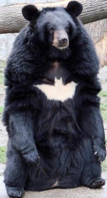 【小ネタ】バットマンみたいな熊(´(ェ)`)