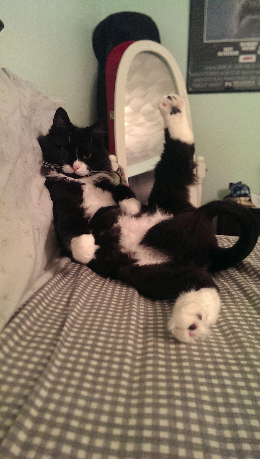 超セクシーなポーズをキメる猫