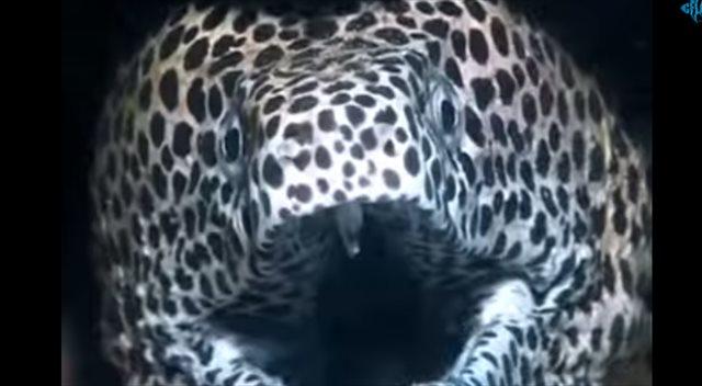【動画】ウツボってこんなに人懐っこかったっけ!?犬のように甘えるウツボが可愛い!