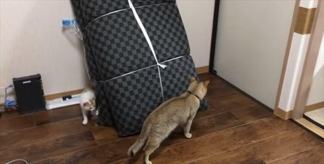 001001 物陰を利用して鬼ごっこをして遊ぶ先輩猫(右)と新入り子猫(左) 最初は先輩猫が新入り猫の行く手に先回りして新入りが逃げまわるという立ち位置で鬼ごっこが進行するのですが・・・  001001  何度も何度も行ったり来たりするうちに先輩猫の動きを学習していく新入り猫、そして遂には・・・   001001  背後を奪取されてしまう(しかも気づいていない)というなんとも情けない展開に。 そろぉ~・・・と先輩猫の背後に忍び寄るその姿はまるでよく出来たコントのようで笑えますw つづきは是非動画でどうぞ。