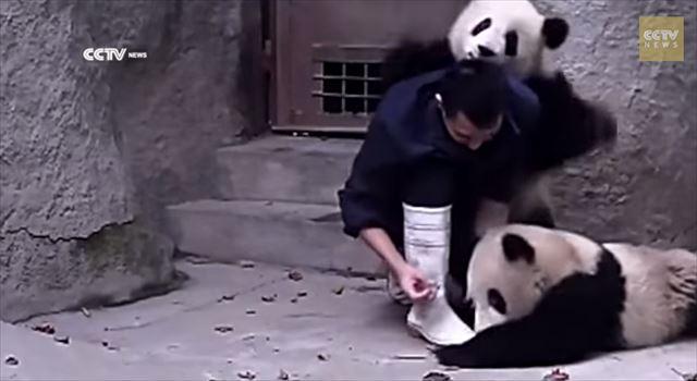 【動画】どうしても薬を飲みたくないパンダ vs 飼育員の様子がグダグダすぎて可愛いwww