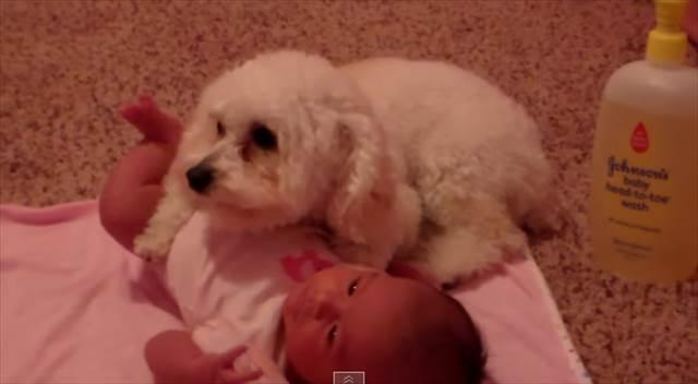 【動画】ある物から献身的に赤ちゃんを守る犬の姿が健気で可愛いと話題