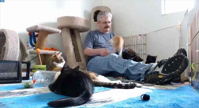 【動画】一匹の子猫の驚いて飛び跳ねたことで他の猫に驚きが連鎖する「猫爆発」現象が可愛い!