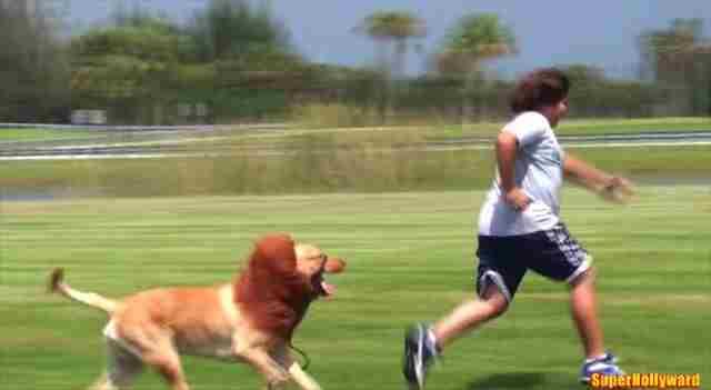 大パニック!犬にライオンのコスプレをさせて放す海外のドッキリが面白いwww