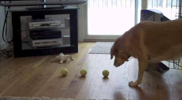 """【動画】思わず噴いたwwwテニスボールを3つ使って""""ある特技""""を披露する犬"""