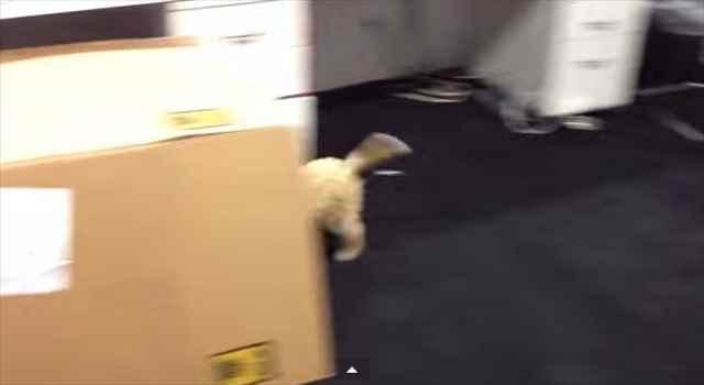 【動画】中を通るだけで犬が子犬になるマシーンが開発されたよ!しかもダンボール製w
