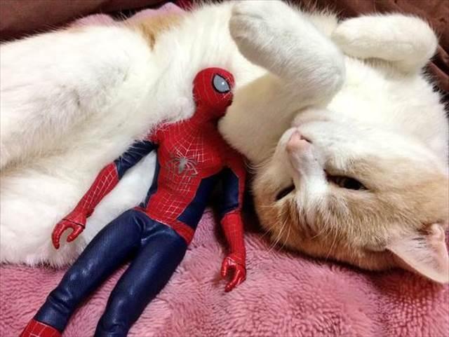 ほっこり感が半端ない・・・!スパイダーマンと猫の超仲良し写真が日本・海外で話題に