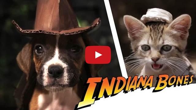 出演者は子犬と子猫!インディー・ジョーンズっぽいショートムービー「Indiana Bones」が可愛い!