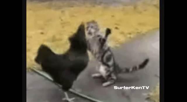 ミッキー・ロークもビックリの猫パンチを繰り出す世界最弱ボクサー「Brian SuTherland」