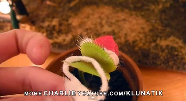 【動画】この発想は無かった!食虫植物を利用したサンタの作り方