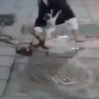 タラちゃんの再来か!?子猫を追いかけ回す輩を撃退したヒーロー猫が話題