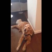 【動画】どうしても散歩に行きたくない出不精すぎる犬が取った行動とは?