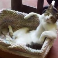 【動画】まるでおっさんの入浴シーン!超リラックス状態でカゴに入っている猫が話題に