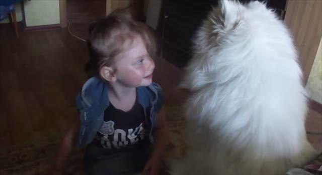 【激萌】サモエド犬に何度もチューされて照れくさそうに喜ぶ少女の様子が話題