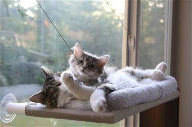 窓に猫用のお昼寝スポットを作る素敵なグッズ『Cat Window Perch』が欲しい!