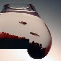 ニュルッ・・・と零れ落ちそうなギリギリ感が楽しい金魚鉢『Bubble Tank』