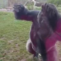 動物園は安全だという思い込みが一瞬で吹き飛ぶ映像が話題