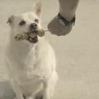 飢えた犬に餌を与えた男性に起きた奇跡-タイの銀行の「投資の大切さ」を訴えたCMが面白い!