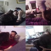 私を見てニャー!決して◯◯◯させてくれない猫が可愛すぎる!