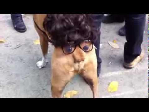 【動画】犬のおしりで作った顔が可愛すぎるwww