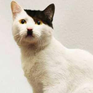 ヒトラーにそっくりな猫を集めたサイト『CATS THAT LOOK LIKE HITLER!』が可愛い