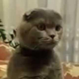 【動画】真剣すぎるwwwスターウォーズをガン見する猫