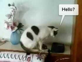 【動画】電話に出て「ニャー」と言う猫