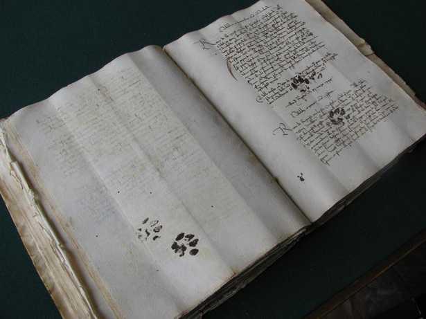 【ちょっと素敵】猫は500年前から同じ悪戯を繰り返していた?