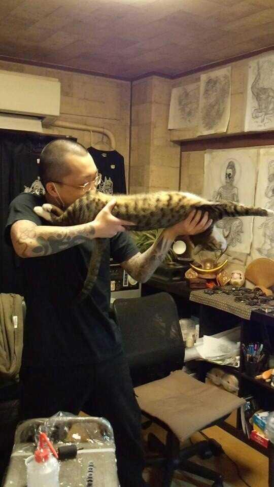 【Twitterで話題】猫ショットガン!!